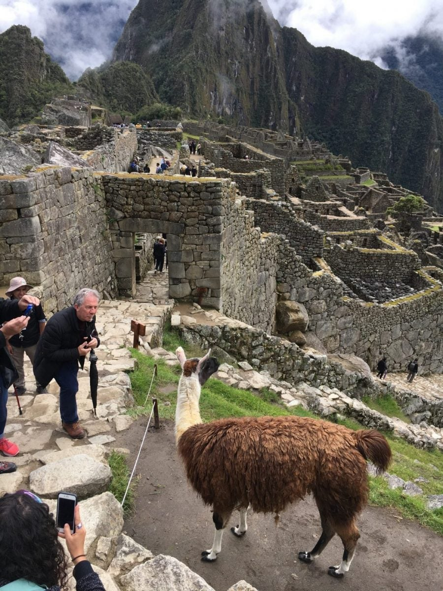 Success! Visiting the Llamas of Machu Picchu, and Enjoying the Sights, Sounds, and Food of Peru!