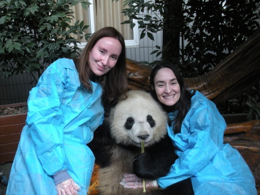 Hugging a Giant Panda Named Oreo in Chengdu, China