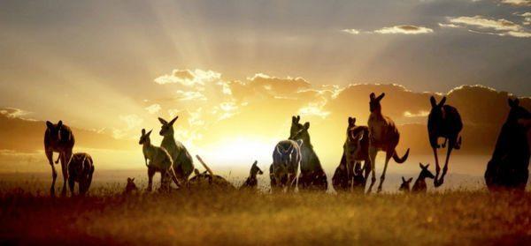 Will It Help You Get Big Travel Now That Citi ThankYou Points Transfer to Australia's Qantas Airways?