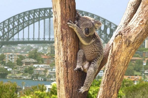 News You Can Use New Flights To Australia 350 Back At ATT 25 Virgin Atlantic Transfer Bonus More