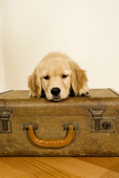 Everything You Need to Know About Flying With Your Pet!
