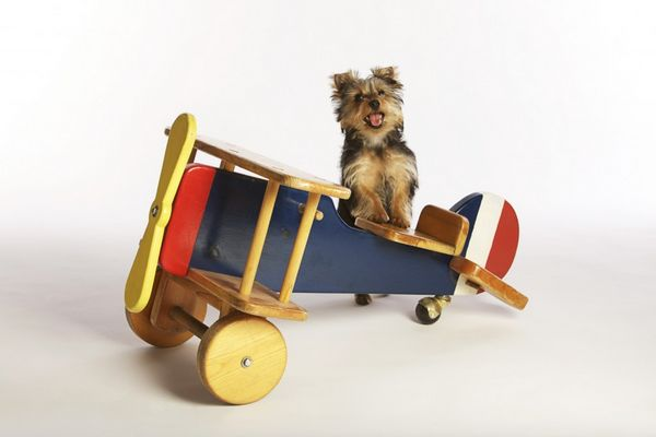 Everything You Need To Know About Flying With Your Pet
