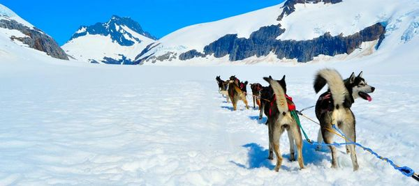 How To Fly To Alaska With British Airways Avios Points