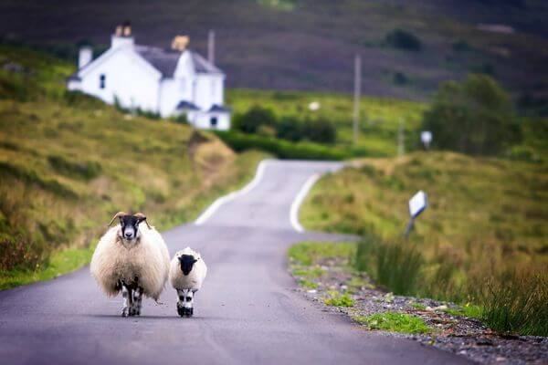 Unbelievable Sale:  East Coast to Ireland and Scotland for $65 One-Way (~$150 Round Trip!)