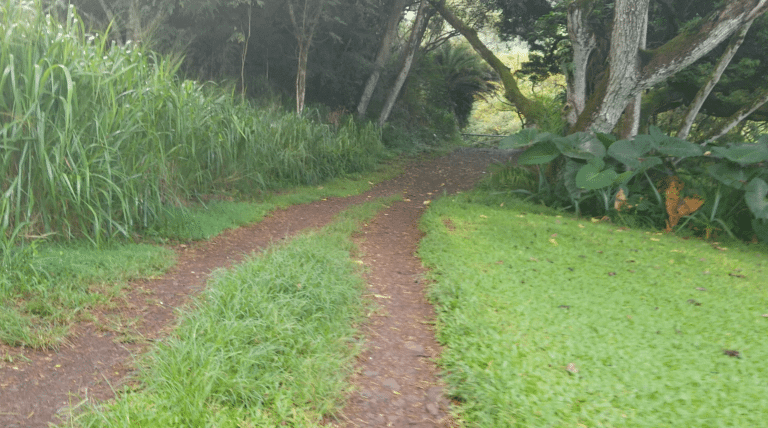 Haiku How To Hiking The Haiku Stairs And Moanalua Ridge In Oahu