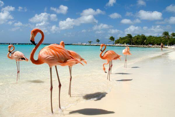 Love The Caribbean This JetBlue 30 Transfer Bonus Is For You