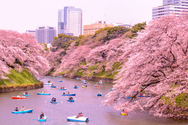 Cherry Blossom Festival in Japan Looks Like Something From a Story Book. The Citi AAdvantage Platinum Select Welcome Bonus Can Take You There in Business Class