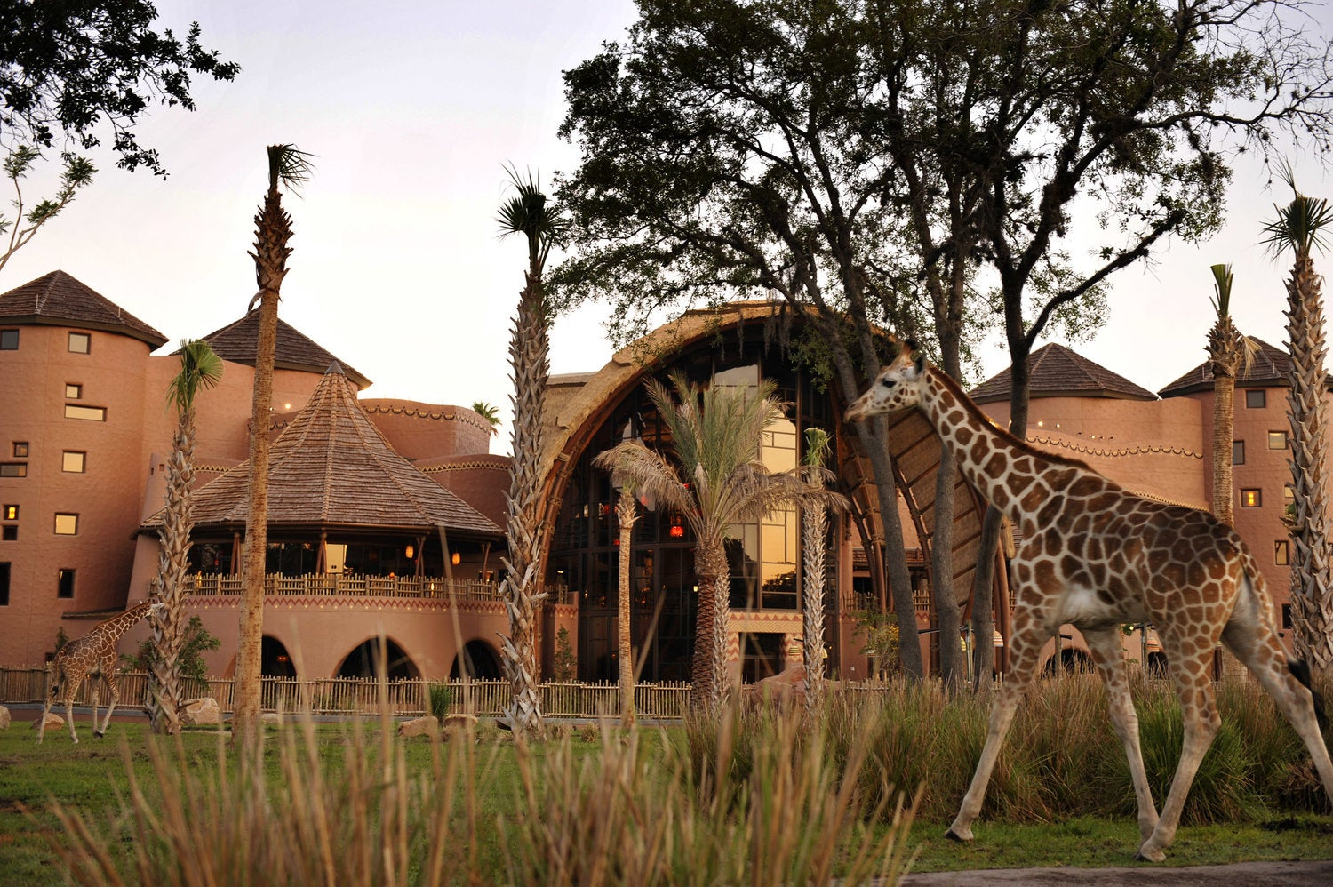 Yes, You Can Really See Giraffes at Disney's Animal Kingdom Lodge