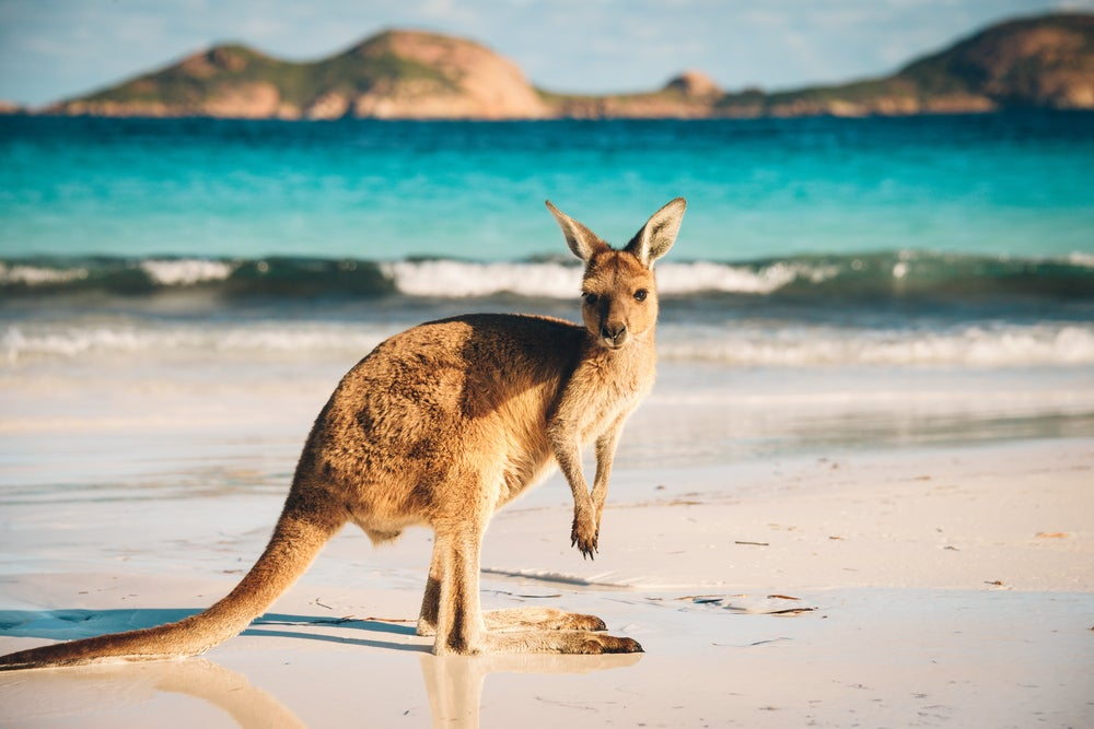 Flights to Australia Don't Have to Cost an Arm and a Leg – Here's How to Book Them Cheaply With Transferable Points