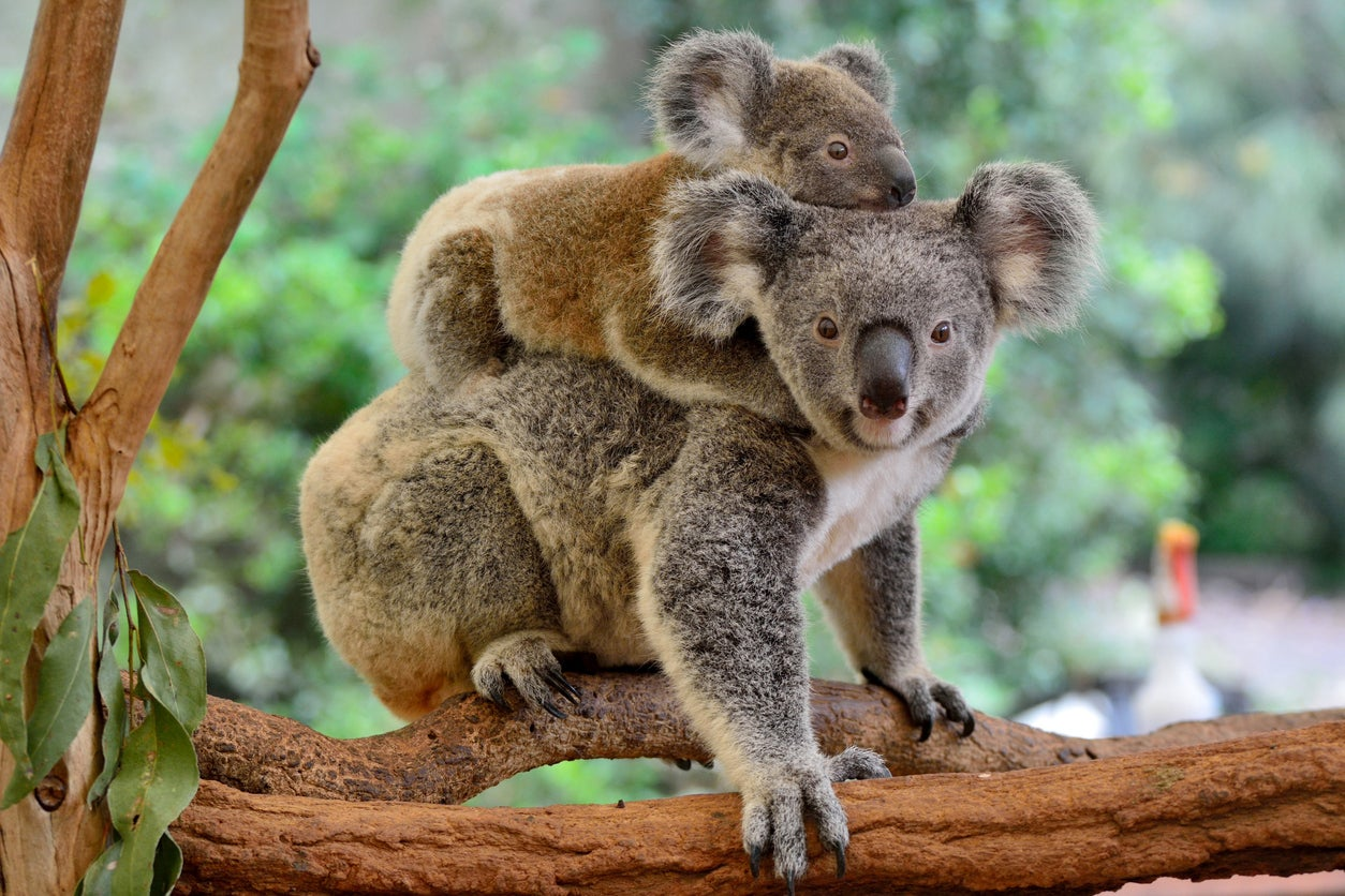 (Dead) Won't Last Long!  Cheap Business Class Flights for Under $1,500 Round-Trip to Australia & New Zealand!