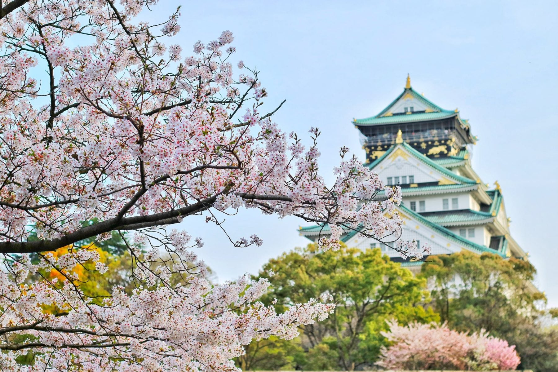 Don't Wait! Use American Airlines Miles to Book Flights to Japan Now, in Time for the Cherry Blossoms!
