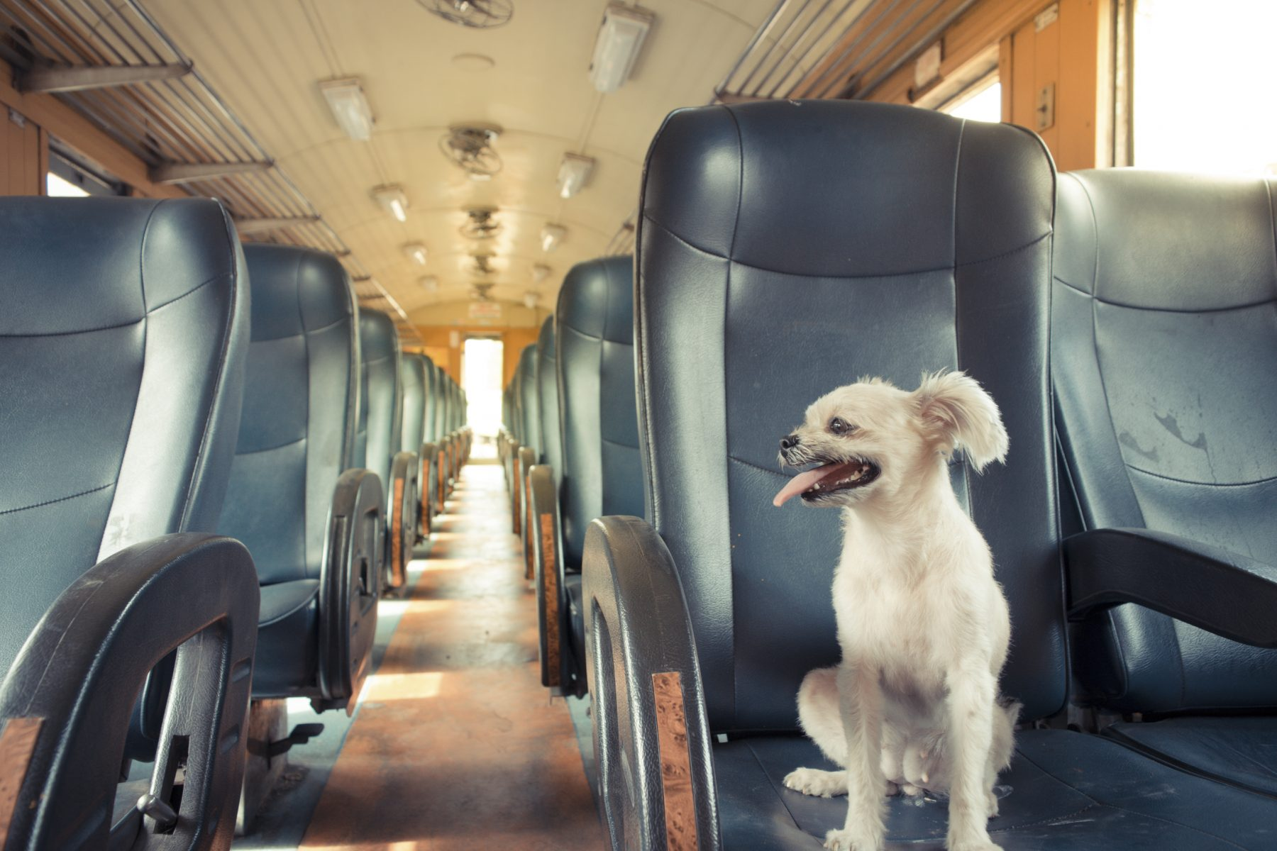 Guide to Train Travel With Pets – and Getting Rewarded for It!