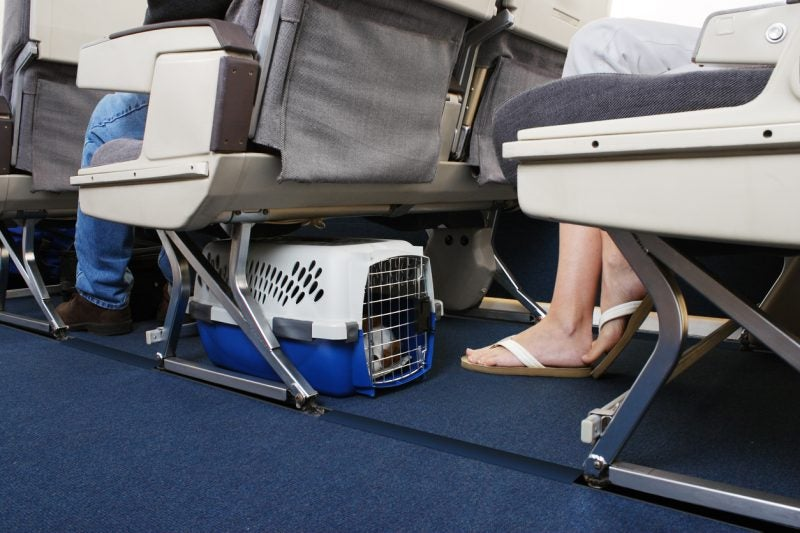 Traveling With Pets During Covid 19 Full Guide Million Mile Secrets