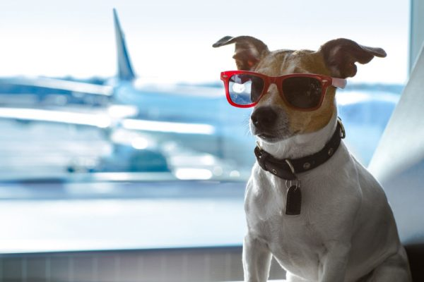 9 most pet friendly airlines in America