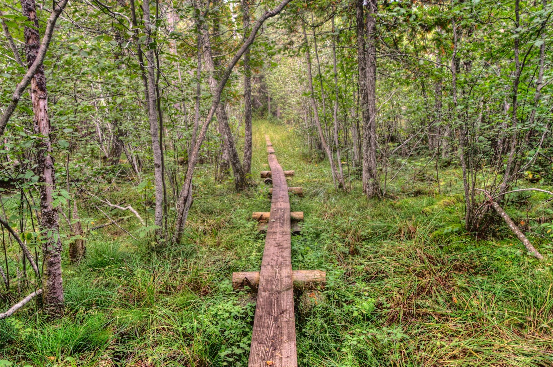 Isolated foot path in Isle Royale National Park