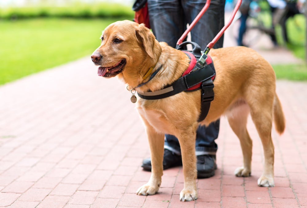 What You Need to Know About Traveling With Emotional Support Animals vs. Service Animals